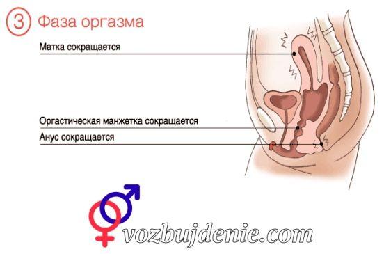 Как доставить девке оргазм