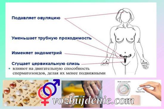 принцип действия оральных контрацептивов