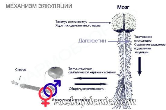 принцип действия препарата