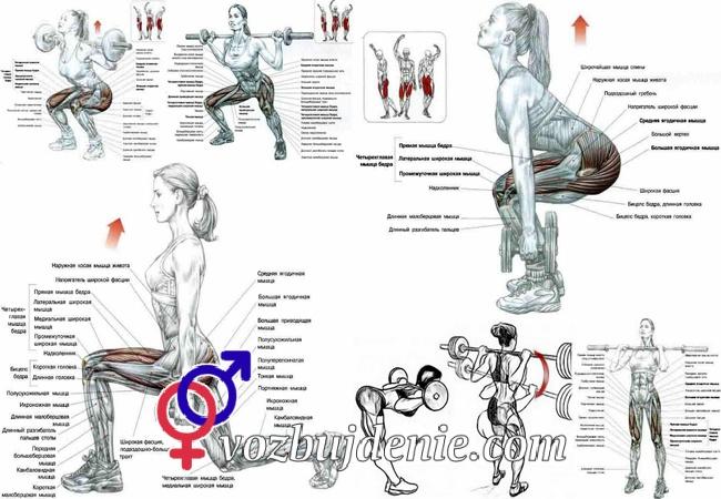 Упражнения для увеличения мышц в домашних условиях 379