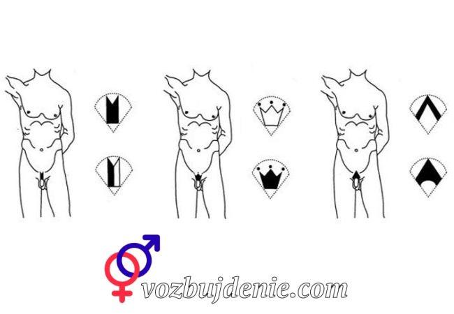 Типы мужчких интимных стрижек